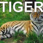 Dạy tiếng anh cho bé qua hình ảnh động vật- bí quyết giúp bé học Tiếng Anh thông minh